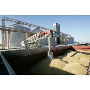Более 7 мтн.тонн зерна исследовано Ростовским филиалом ФГБУ «Центр оценки качества зерна»