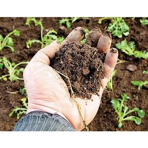 Превышение цинка в почве