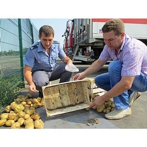 Более 1,6 млн. тонн сельхозпродукции исследовано на Дону в июле 2017 г.