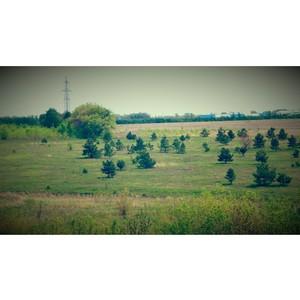 Земельный участок зарос сорной и древесной растительностью