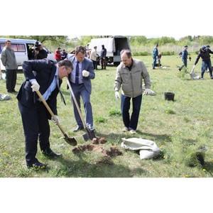 Сотрудники Ярэнерго высадили 400 деревьев