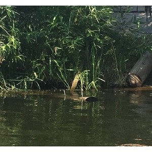 """јктивисты ќЌ' в """"ел¤бинской области обнаружили места слива нечистот в реку ћиасс"""