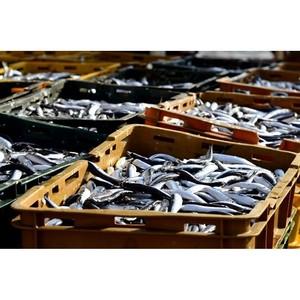 Карельский Комбинат увеличит экспорт на 35%