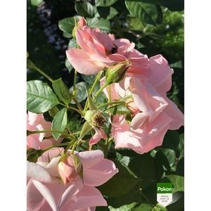Пышное цветение с Pokon: в Сокольниках стало красивее.