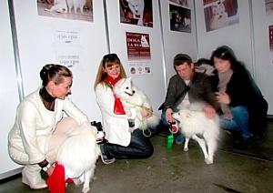 В Киеве прошла фотовыставка собак редкой породы «Dogs`La Beauty»