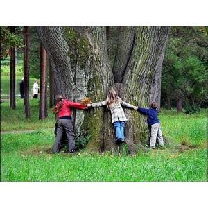 Определены победители конкурса сочинений на тему «Лес» среди детей работников ГК Талтэк