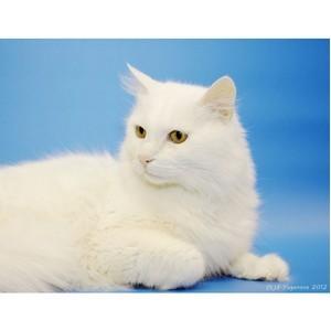 Все оттенки кошачьего. Высокохудожественные коты найдут своих хозяев