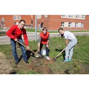 Команда «Молодежки ОНФ» в Коми приняла участие в акции по посадке деревьев в Сыктывкаре