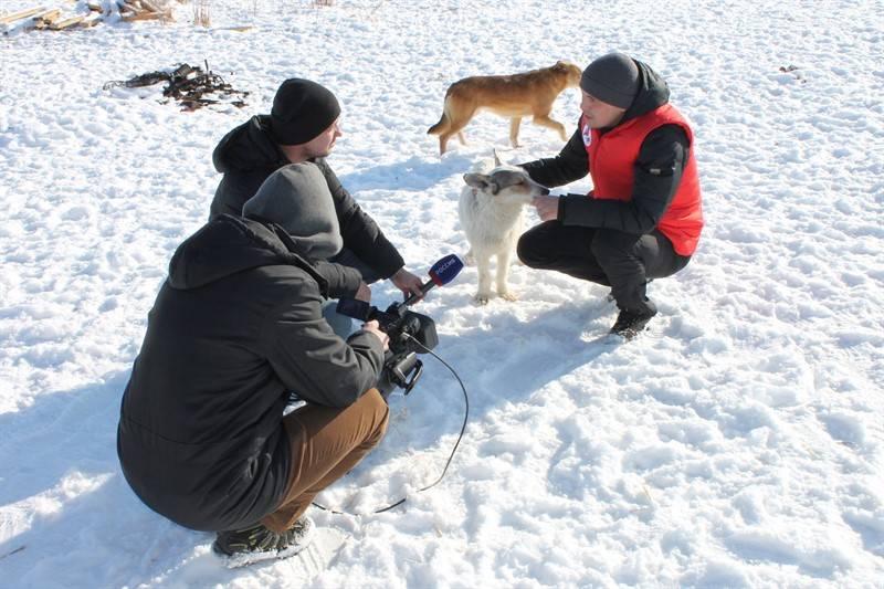 Активисты ОНФ в Челябинской области помогли благотворительному приюту для бездомных животных