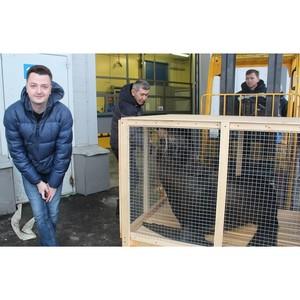 ВСТ благополучно отправил морского котика из Екатеринбурга в Сочи
