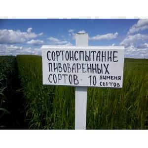 «Балтика» представила агропроект на семинаре по новым сортам зерновых культур