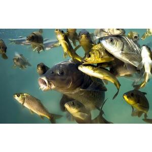 Инновации в кормлении и выращивании рыб будут представлены в Москве