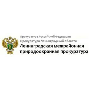 Незаконная свалка отходов на территории лесных участков Всеволожского и Тосненского районов