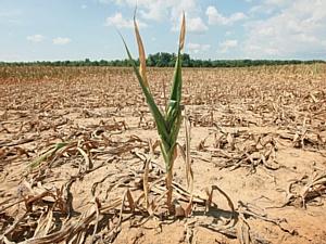 В Курганской области оценивать необходимость выдачи субсидий фермерам будут более объективно.
