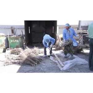 Специалистами Астраханского филиала на импортных саженцах персика выявлена шарка сливы