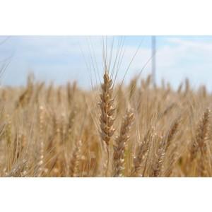 Специфические вопросы производства сельскохозяйственной продукции