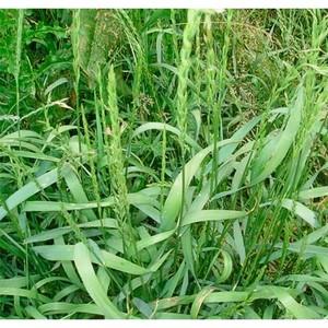 О выявлении зарастания плодородной земли сорной травой в Нижнедевицком районе