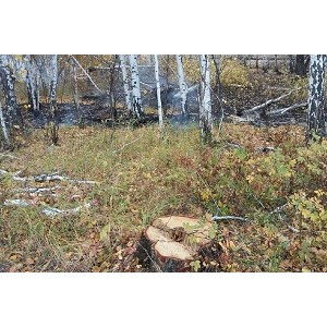 Эксперты ОНФ в Челябинской области настаивают на восстановлении «зеленого щита» региона