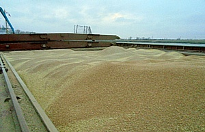 Более 526 тыс. тонн сельхозпродукции ушло в 19 стран