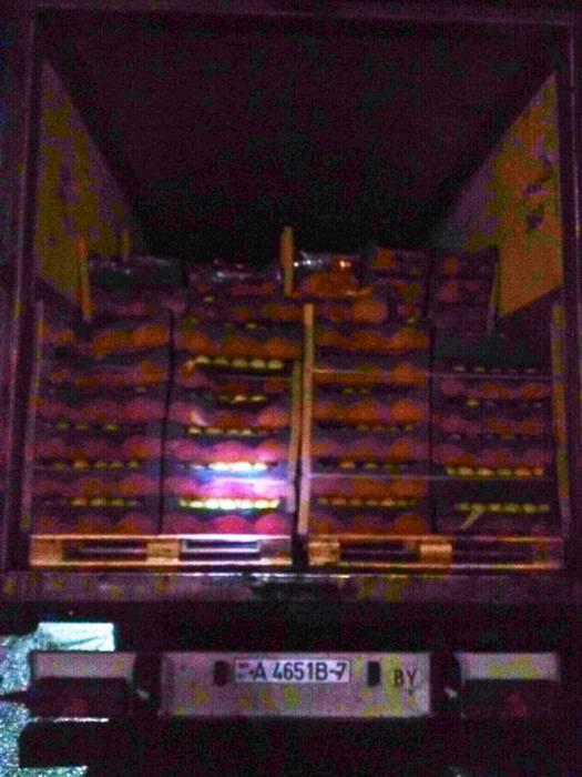 Смоленскими таможенниками пресечен незаконный ввоз 20 тонн яблок