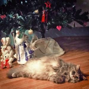 Любой кот под ёлкой может стать знаменитым