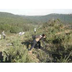 ФГБУ «ВНИИКР» на международном семинаре в сфере контроля вредных организмов и инвазионных растений