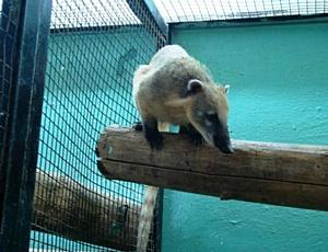 Партию зоопарковых животных отправили из Новосибирска в Узбекистан.