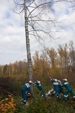 В филиале «Тамбовэнерго» прошло обучение персонала по специальности «Вальщик леса»