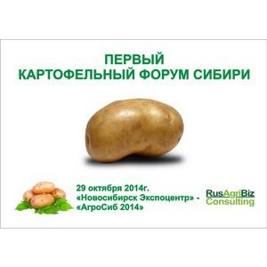 В Новосибирске пройдет Первый картофельный форум Сибири.