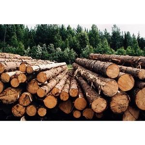 «Энфорта» организовала видеотрансляцию Олимпиады работников лесной отрасли Алтайского края