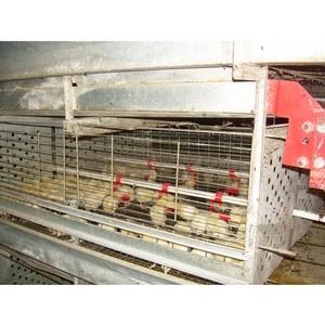 О результатах плановой проверки предприятия по содержанию и разведению цыплят-бройлеров в г. Ростове