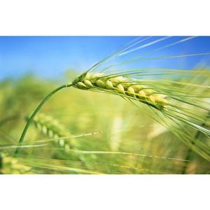 Техрегламент «О безопасности зерна» и закон «О семеноводстве» нарушены