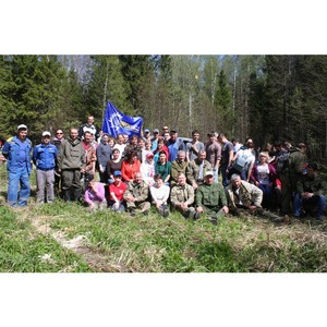 Сотрудники «Ивэнерго» оказали помощь в восстановлении лесов Ивановской области