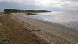 В Новосибирской области увеличился объем добычи ценного биологического сырья – цист рачка Artemia.