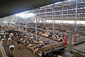 Роботизированные фермы Lely формата XL появятся в России