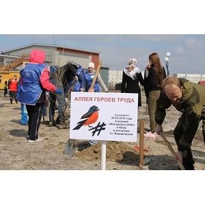 По инициативе команды «Молодежки ОНФ» в рабочем поселке Федоровский высажена аллея героев