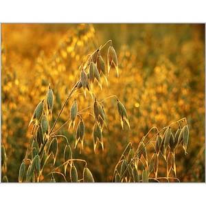 О выпуске в обращение зерна без декларации о соответствии