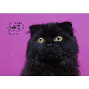 Выборы кота-президента: голосование, подсчет голосов