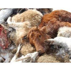 В крестьянском хозяйстве «Большевик» выявлены нарушения при перевозке биоотходов