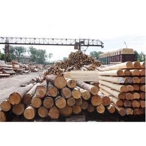 В Сибири выросло число попыток контрабанды древесины