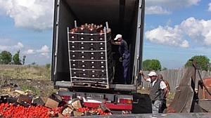 Более 80 тонн санкционной польской продукции  уничтожили смоленские таможенники