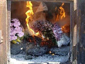 Пресечена попытка ввоза зараженных цветов на территорию Новосибирской области.