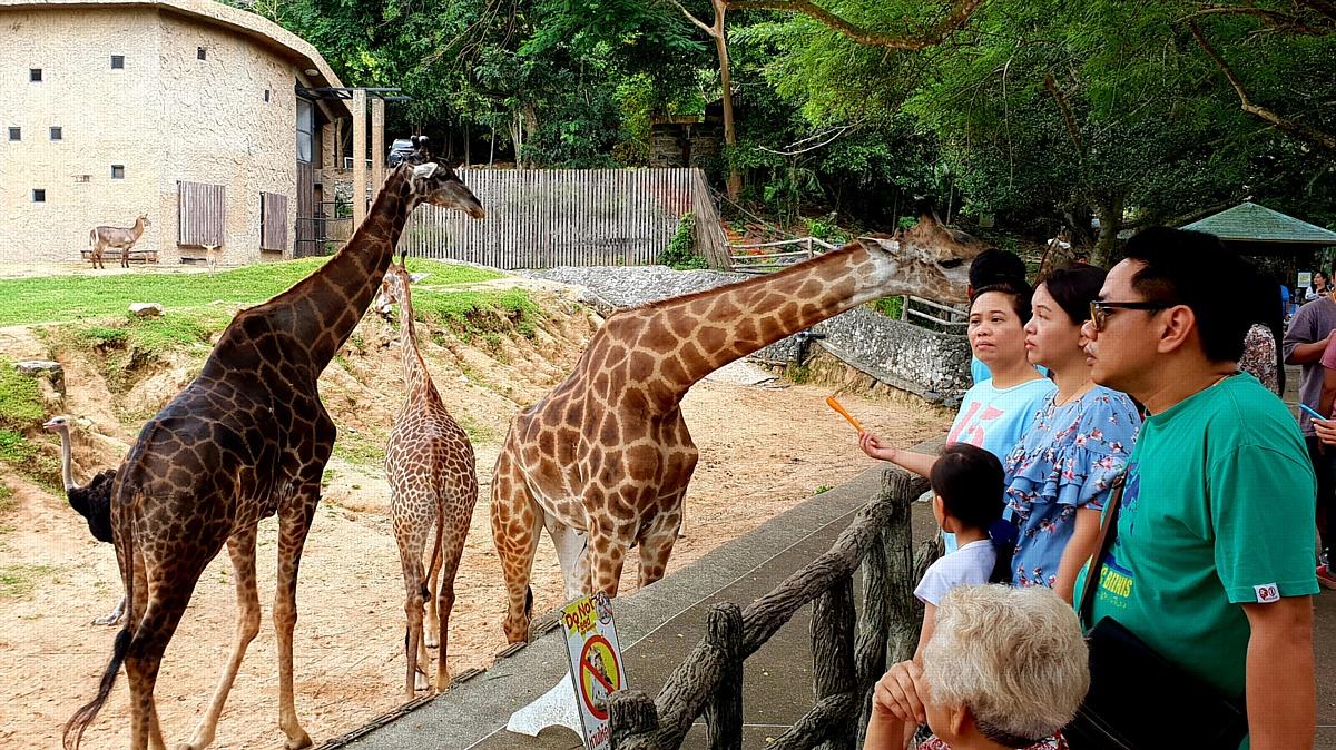 Открытый контактный зоопарк Кхао Кхео в Королевстве Таиланд приглашает
