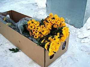 Партию зараженных цветов выявили и уничтожили инспекторы Управления Россельхознадзора по НСО.