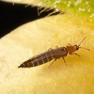 Проконтролировано уничтожение растений, зараженных карантинным вредным организмом