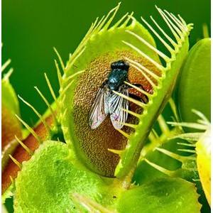 Новосибирцам покажут экзотические растения