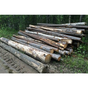 Амурские активисты ОНФ решают проблемы в сфере реализации незаконно заготовленной древесины
