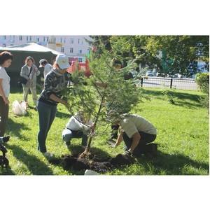 Представители ОНФ в Республике Алтай провели экологическую акцию по посадке деревьев