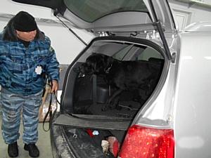 В Брянской области задержан украинец со 100 килограммами гашиша