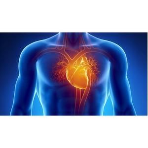 10 удивительных фактов о нашей сердечно-сосудистой системе